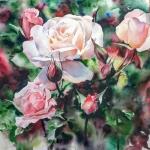 rosen2